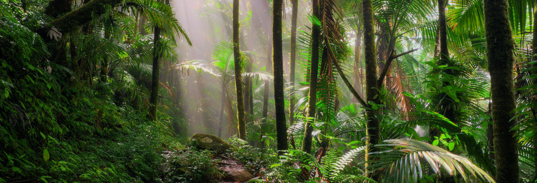 Bosque Carite Rainforest Tour