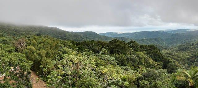 Excursión al Bosque Nacional El Yunque