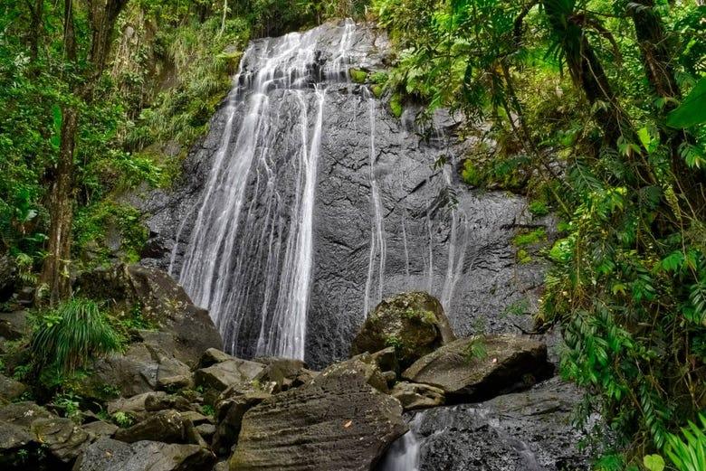 ,Excursión a Parque Nacional El Yunque