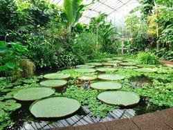 Real jard n bot nico de edimburgo horario precio y for Jardin botanico horario