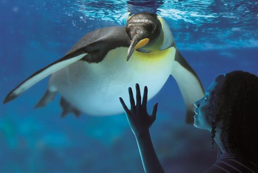 Sea Life London Aquarium Tickets Londoncitybreak Com