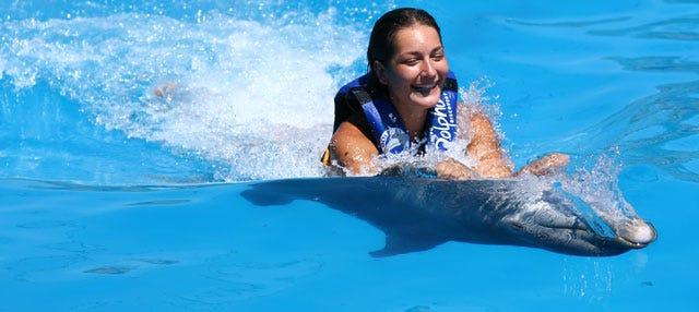 Nado con delfines en Punta Cana
