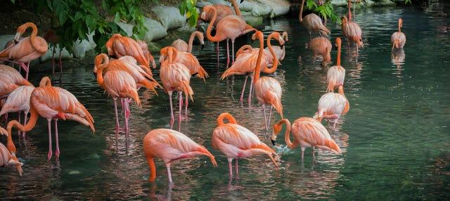 Jardín Botánico + Zoo de Santo Domingo
