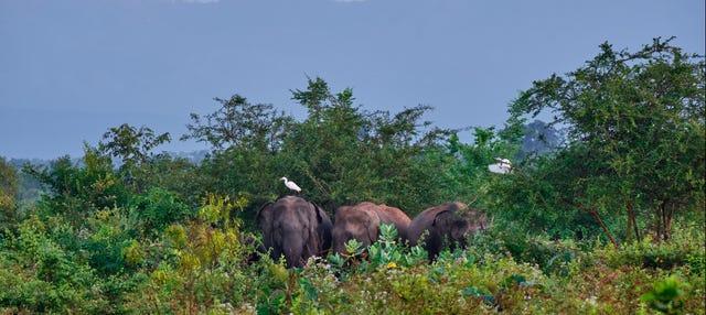 Excursión a Udawalawe