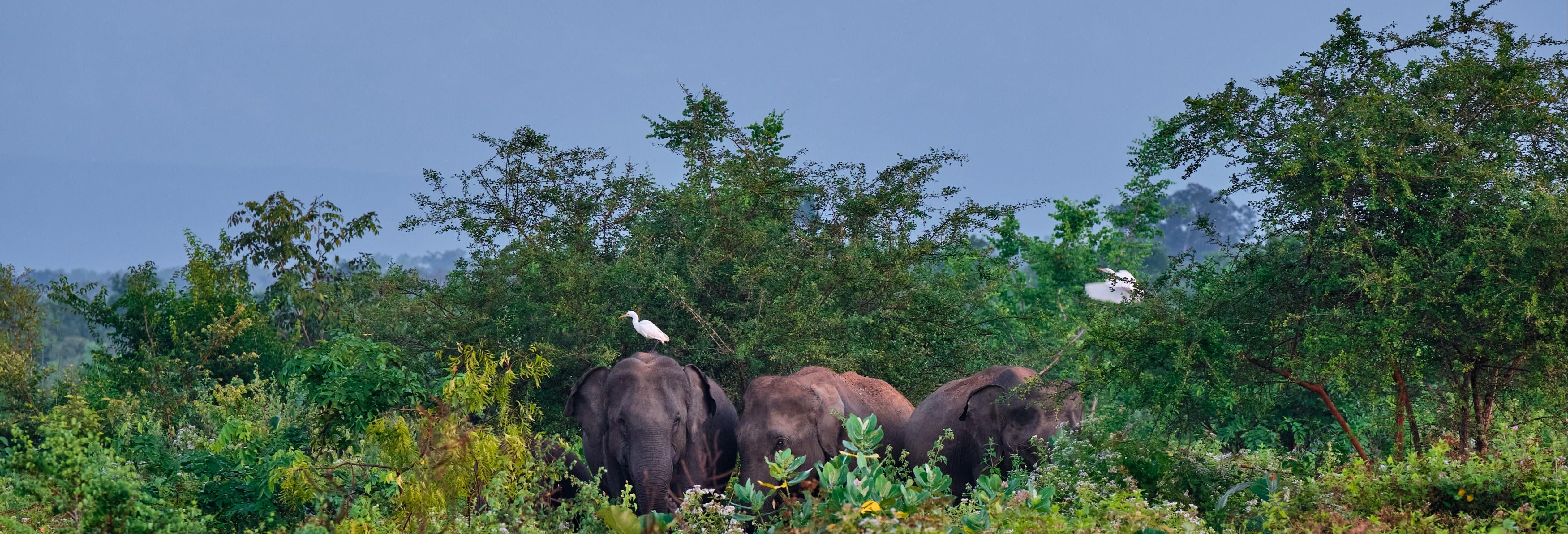 Excursão a Udawalawe