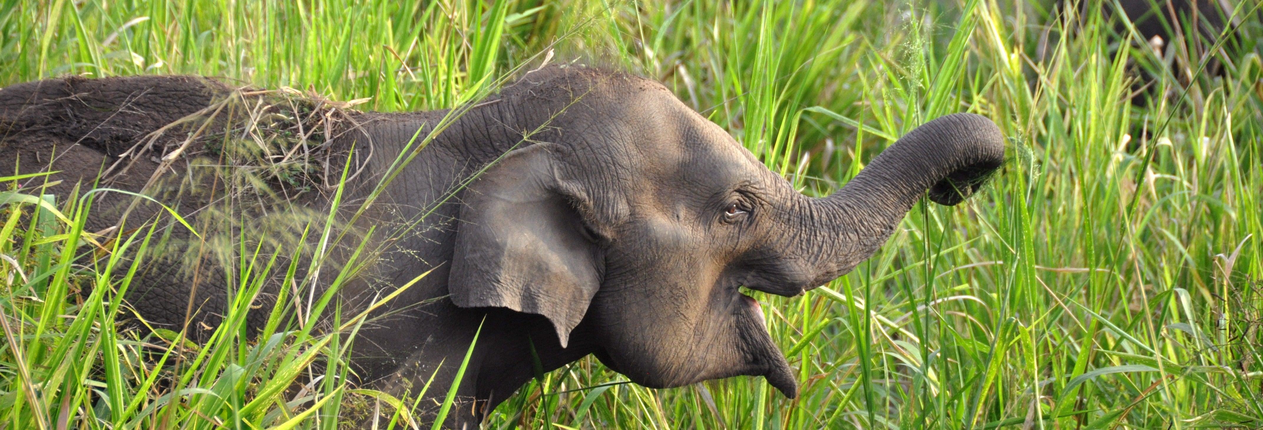 Hurulu Eco Park Safari