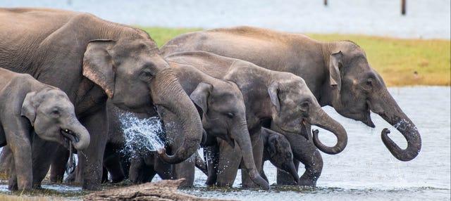 Safari por el Parque Nacional de Kaudulla
