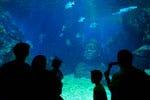Entrada al Sea Life Bangkok