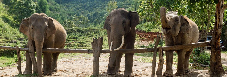 Tour de 2 dias ao povo Karen + Santuário de elefantes
