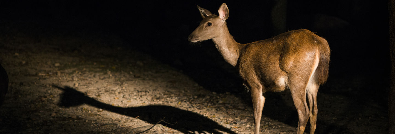 Entrada al Safari Nocturno