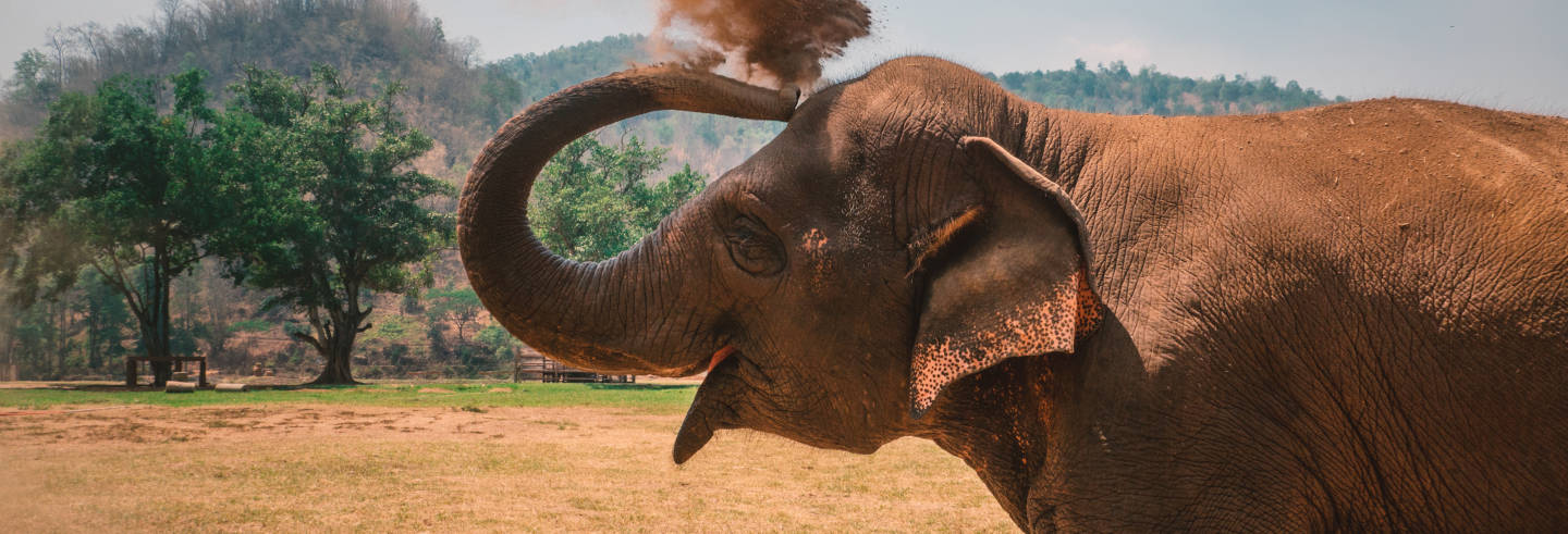 Excursión al refugio de elefantes de Tung La Korn en 4x4
