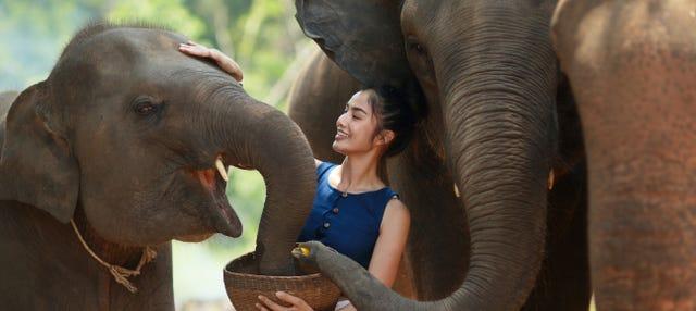 Excursão ao santuário de elefantes