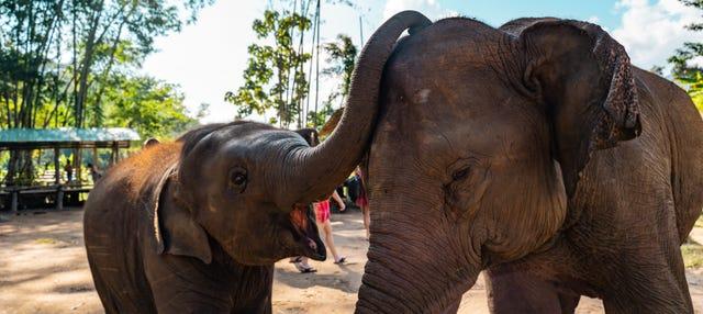 Excursión al santuario de elefantes + Rafting