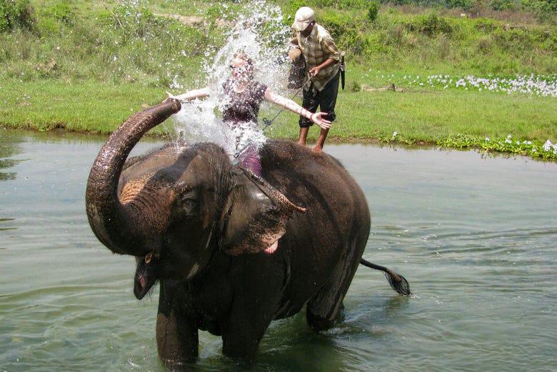 ,Excursión a Santuario de Elefantes