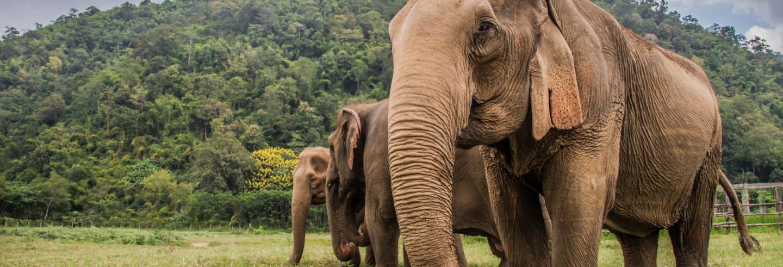 Tour de 2 dias por Huay Khao Lip + Santuário de elefantes