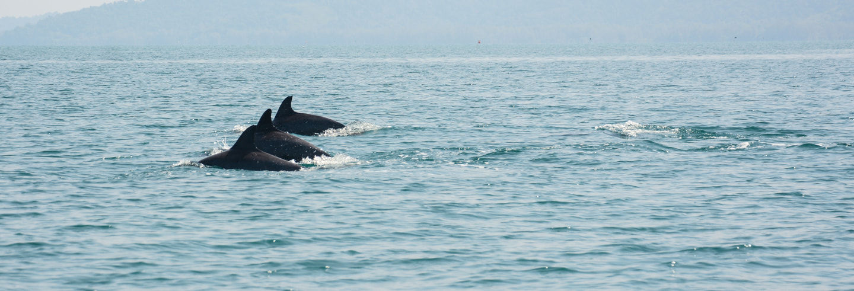 Observation de dauphins + snorkeling