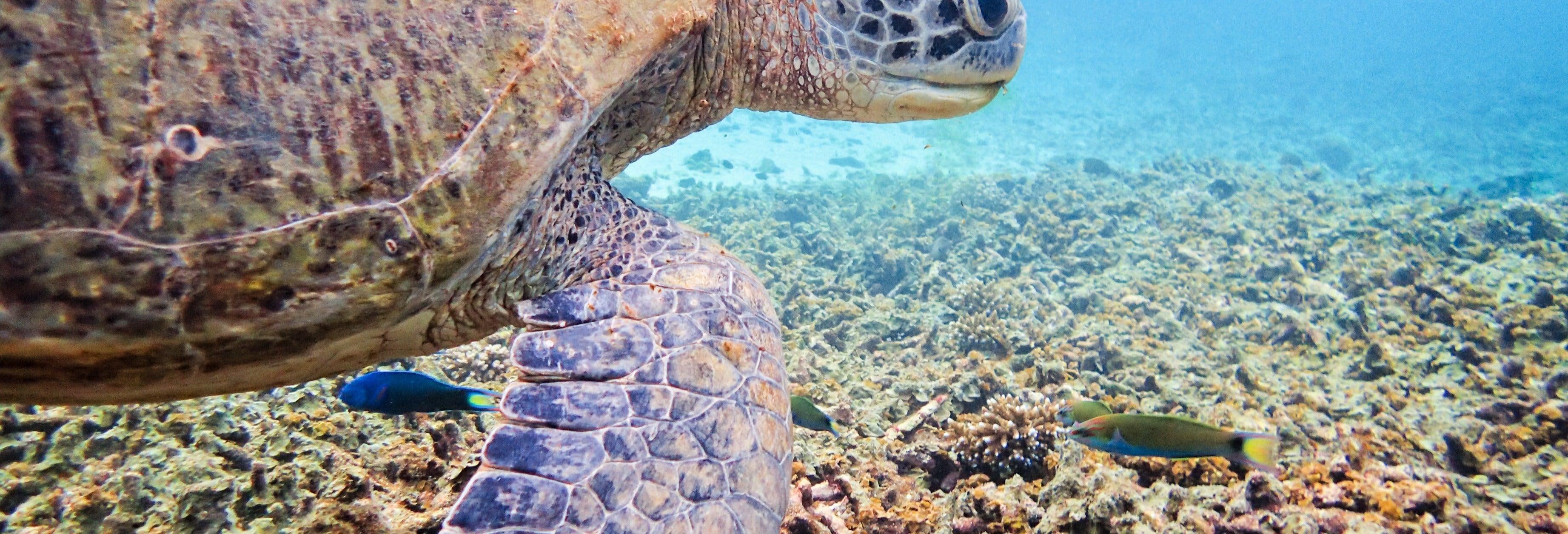 Koh Tao Diving