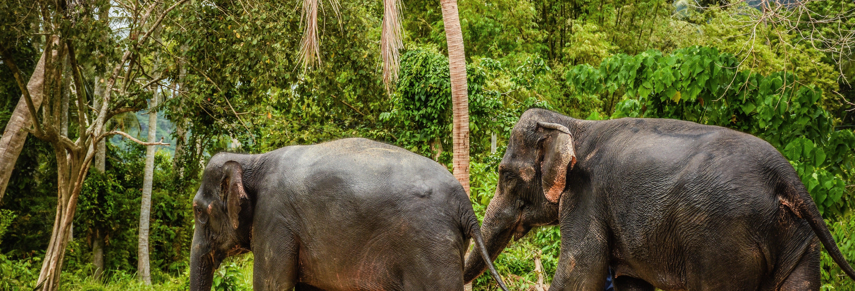 Samui Elephant Jungle Sanctuary Trip