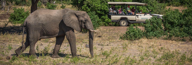 Tour di Koh Samui in jeep e giro in elefante