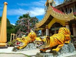 ,Excursion to Krabi Island,Tiger Temple