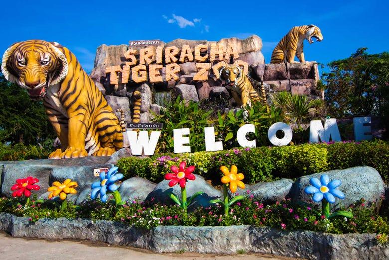 Kết quả hình ảnh cho sriracha tiger zoo pattaya