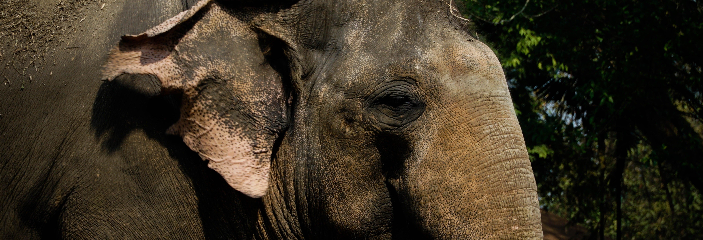 Excursão ao Jungle Elephant Sanctuary
