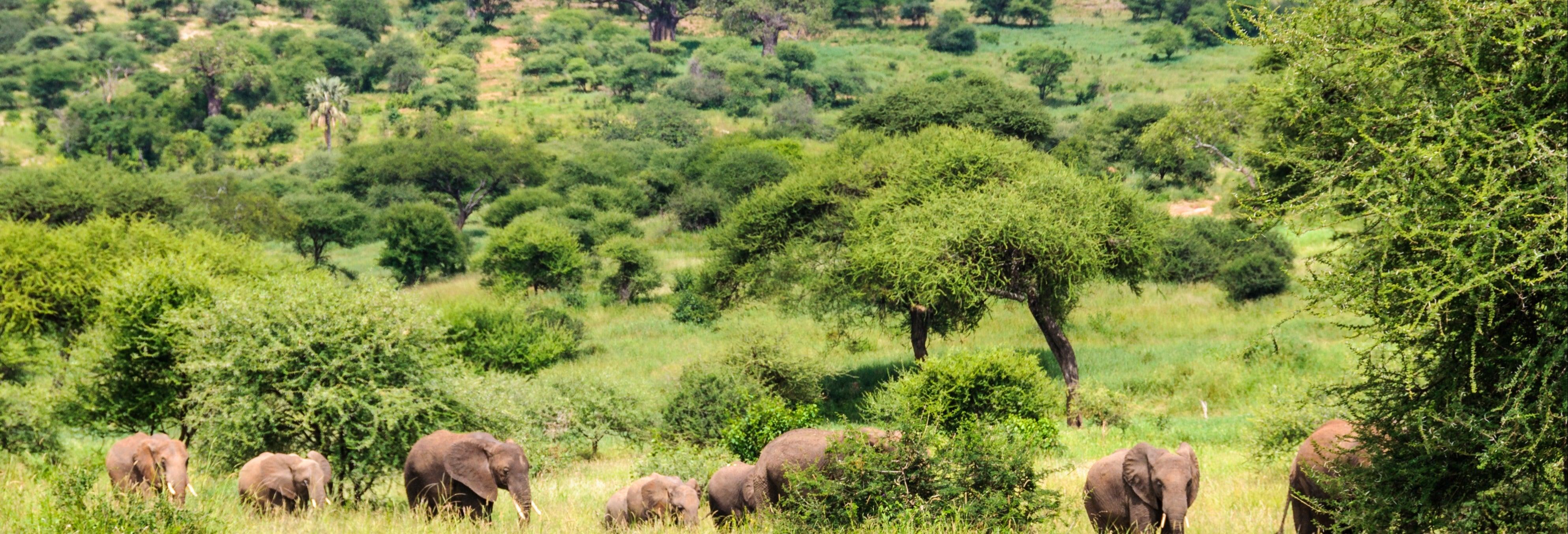 Safari de 6 días por el norte de Tanzania
