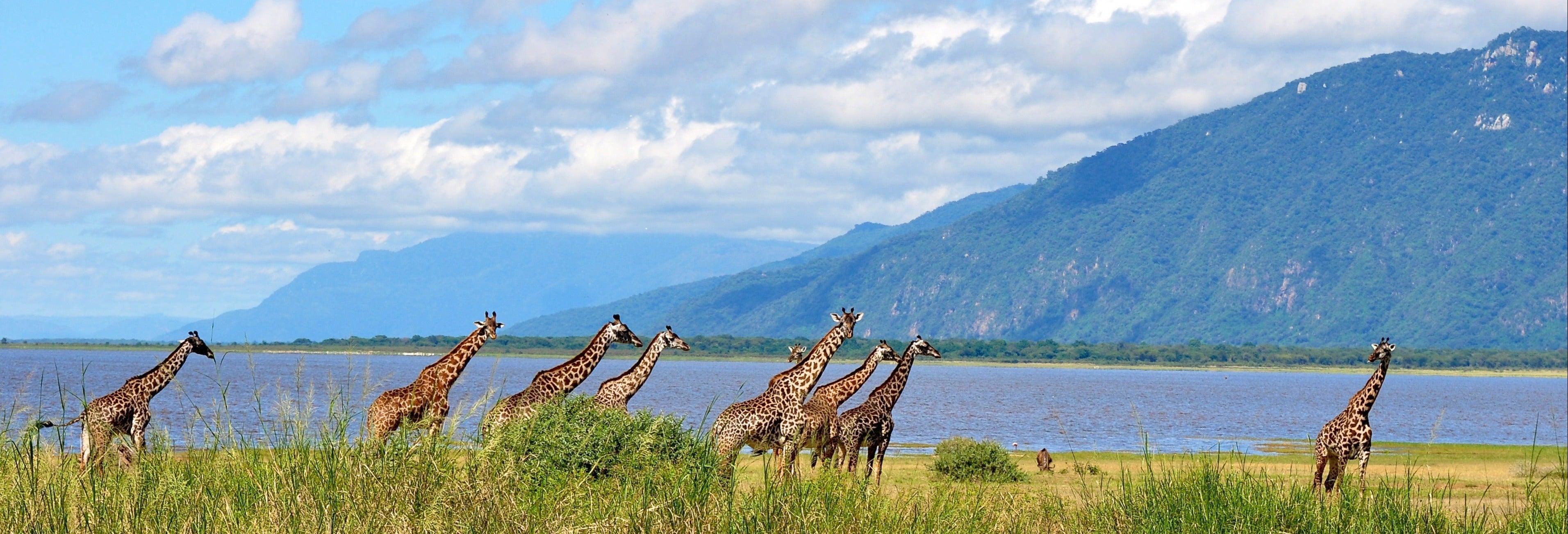 Safari por el Lago Manyara