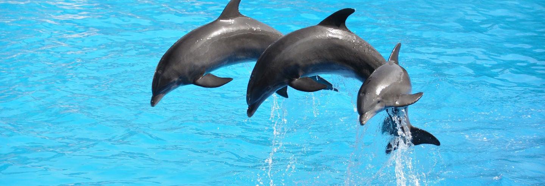 Excursión al delfinario de Antalya