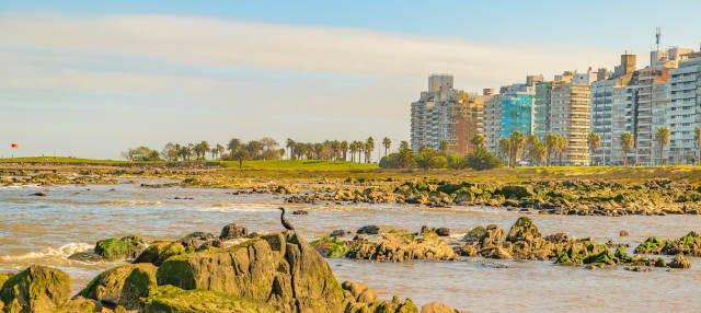 Free tour por Punta Carretas ¡Gratis!