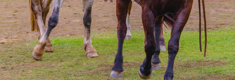 Visite de Montevideo pour croisiéristes + Balade à cheval