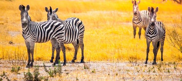 Safari de 7 días desde Victoria Falls a Johannesburgo