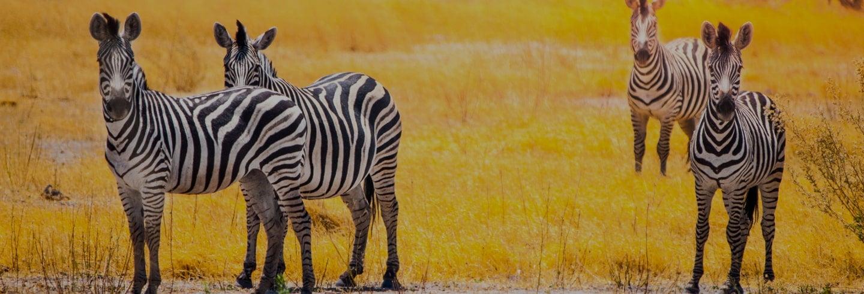 Safari di 7 giorni da Victoria Falls a Johannesburg