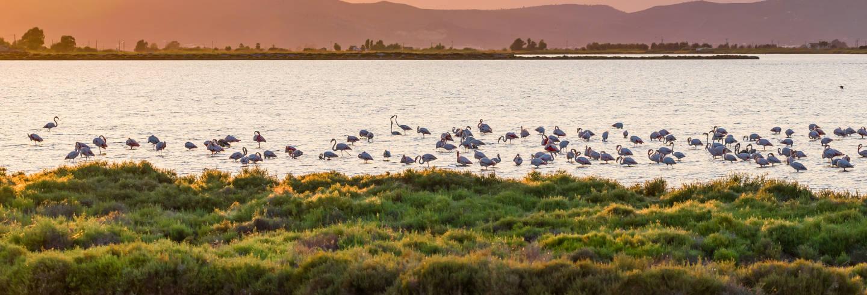 Delta del Ebro Natural Park